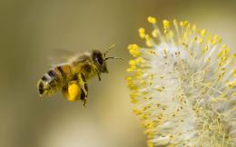 honey bee amazing hd wallpaper honey bee best hd wallpaper 247