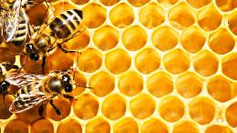Honeycomb Cartoon HD Wallpapers 1128