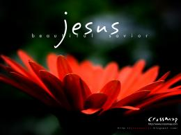 Jesus Savior HD Flower Wallpaper Download this free Christian image 1618