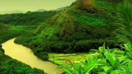 Jungle river HD Wallpaper 1920x1080 Jungle river HD Wallpaper 1033