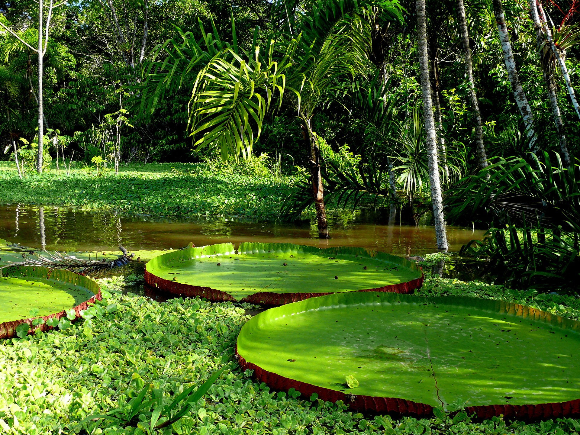river high definition wallpaper download jungle river images free 960