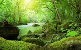 River Jungle Moss Stones Vegetation Green 156