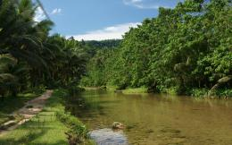 Jungle river nature – Mindoro island 371
