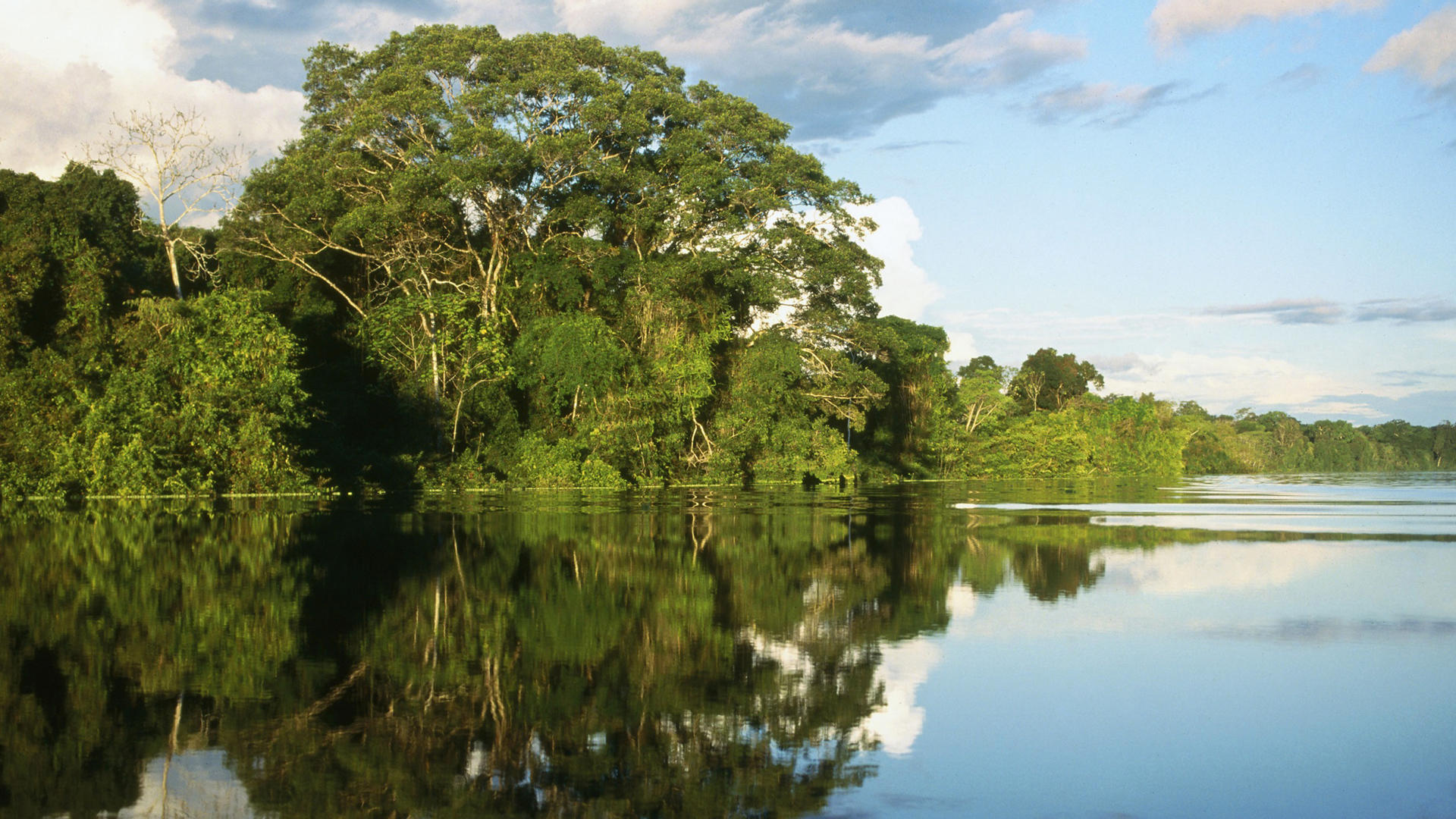 Check out this cool Amazon Jungle River Hd Desktop Wallpaper looking 149