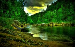 Jungle River HD Wallpapers 1170
