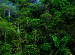 Jungle Forest HD Wallpapers Photos 276