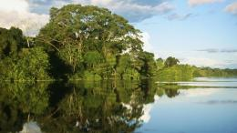 Check out this cool Amazon Jungle River Hd Desktop Wallpaper looking 665
