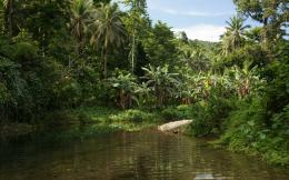 Jungle vegetation wallpaper 423