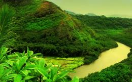 Jungle Forest HD Wallpapers Photos 128