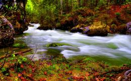 Jungle River HD Wallpapers 1216