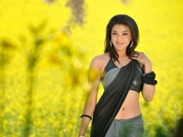 Kajal Agarwal HD Saree Wallpapers 1082