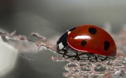 red ladybug background desktop wallpaper wallpapers 2880x1800 228