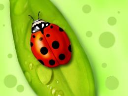 Ladybug Desktop Wallpapers 1248