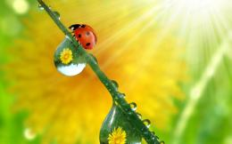 ladybug high definition wallpapers best desktop background images 1750