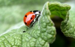 Ladybug close up wallpaper 15 Wallpapers 1318