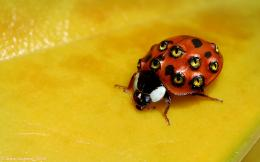 weird wallpapers ladybug backgrounds wallpaper desktop 1920x1200 1055