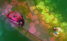 1680x1050 Ladybug Vista desktop PC and Mac wallpaper 1589