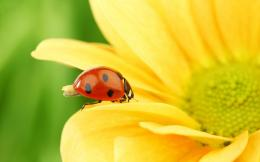 ladybug high definition wallpapers best desktop background photographs 126