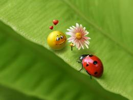 1280x960 Ladybug love desktop PC and Mac wallpaper 1592
