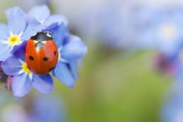 Amazing Ladybug Animal Macro Wallpaper High Resolution 1656