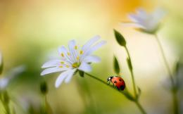 Ladybug Desktop Wallpapers 1815