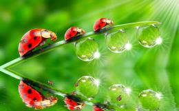 ladybug desktop background image ladybug desktop wallpapers ladybug hd 1077