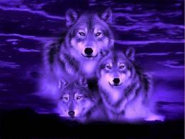 Wolve Blue Wolf Fantasy Best Hd Wallpaper with 1024x768 Resolution 971
