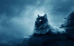 maine coon beautiful cat wallpapers hd images background 326