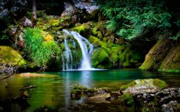 beautiful jungle scene nature wallpaper share this nature background 1979