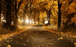 beautiful autumn wallpaper 421