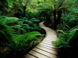 Nature Cool Wallpapers HD 1078