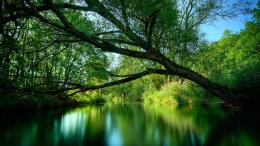 Nature green lake HD wallpaper 106