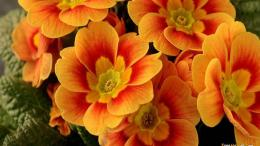 beautiful orange flowers wallpaperView All 215