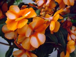 orange flowers wallpaper orange flowers wallpaper orange flowers 1092