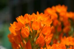 orange flowers wallpaper orange flowers wallpaper orange flowers 1401
