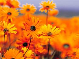 orange flowers wallpaper orange flowers wallpaper orange flowers 761