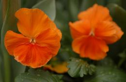 orange flowers wallpaper orange flowers wallpaper orange flowers 1789