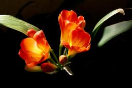 Orange Flowers Wallpapers | Orange Flowers Wallpapers | Flowers 667