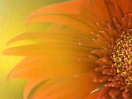 Orange Flowers Picture, Bright Colored Flower, Added with Glowing 824