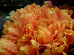 orange flowers wallpaper orange flowers wallpaper orange flowers 502