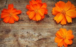 Orange Flowers Wood Wallpaper 269