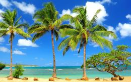 Beach Palm Tree Wide Wallpapers 1032