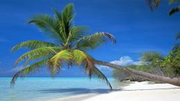 Wallpaper Shadow Palm Tree Sea Summer Wide Desktop Picture wallpapers 739