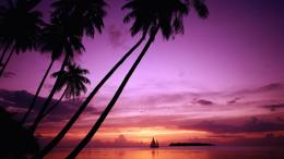 Tagged with: Palm Tree Sunset Palm Tree Sunset Wallpaper 1797