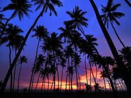 palm trees background image palm trees sunset pictures palm trees 1331