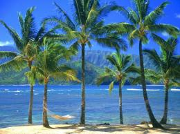 Beach Palm Tree Wide Wallpapers 1002