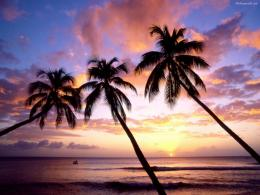 Leaning Palm Trees On Beach Sunset HD Wallpaper 711