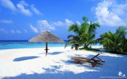Beach wallpapers Tropical Palm Trees wallpaper 1672