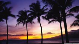 Palm Trees Sunset Wallpaper 1920x1080 Palm, Trees, Sunset 1743