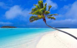2560x1600 Isolated palm tree desktop PC and Mac wallpaper 137